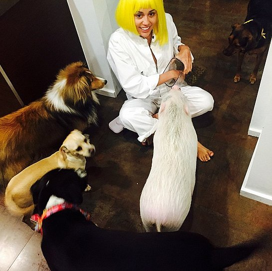 Miley-Cyrus-surrounded-herself-pets-Memorial-Day-weekend