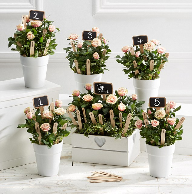 زهور الداليا