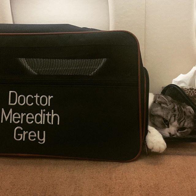 قطة تايلور سويفت