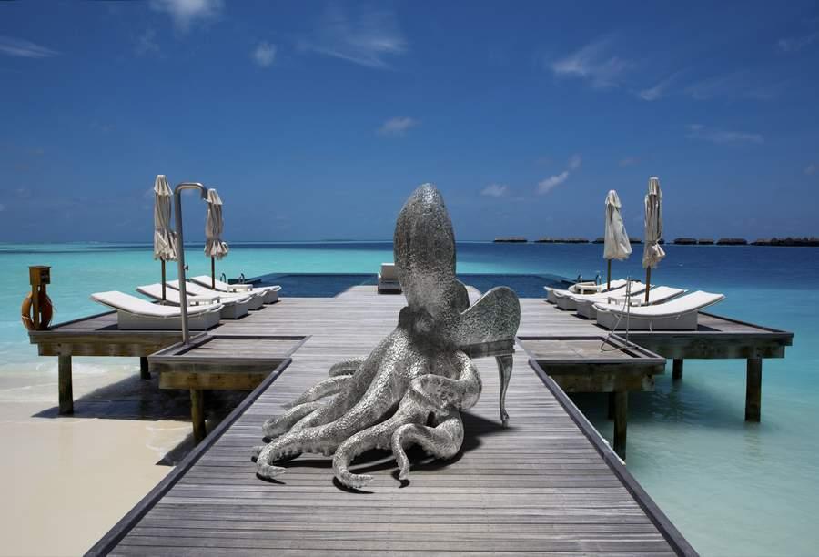 Octopus Maldives 2