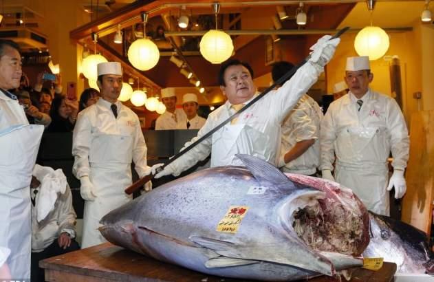 سمكة تونة بـ 117 ألف دولار أمريكي (3)