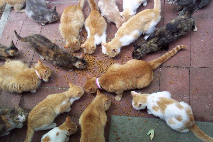 resized_Cats