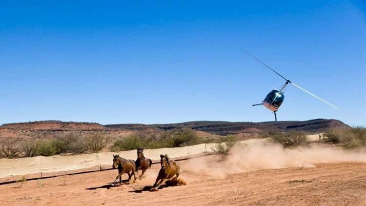 مذبحة الخيول باستراليا
