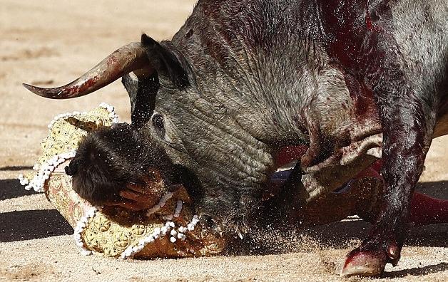 مصارع للثيران (12)