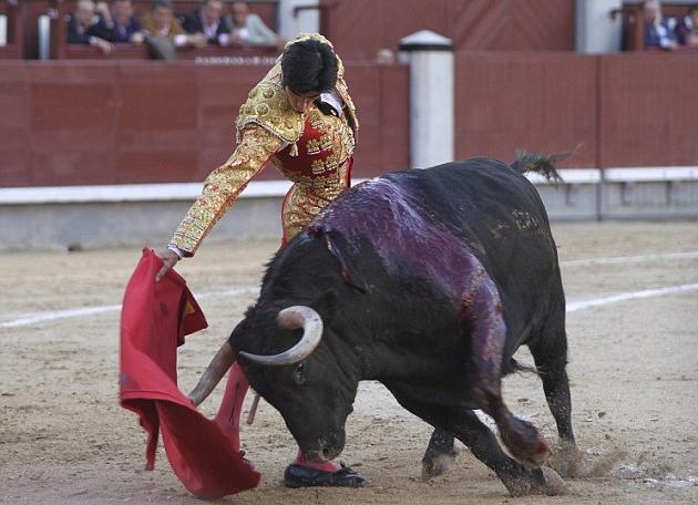 مصارع للثيران (3)