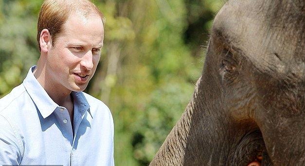 الأمير وليام شارك في حملة لحماية الفيلة