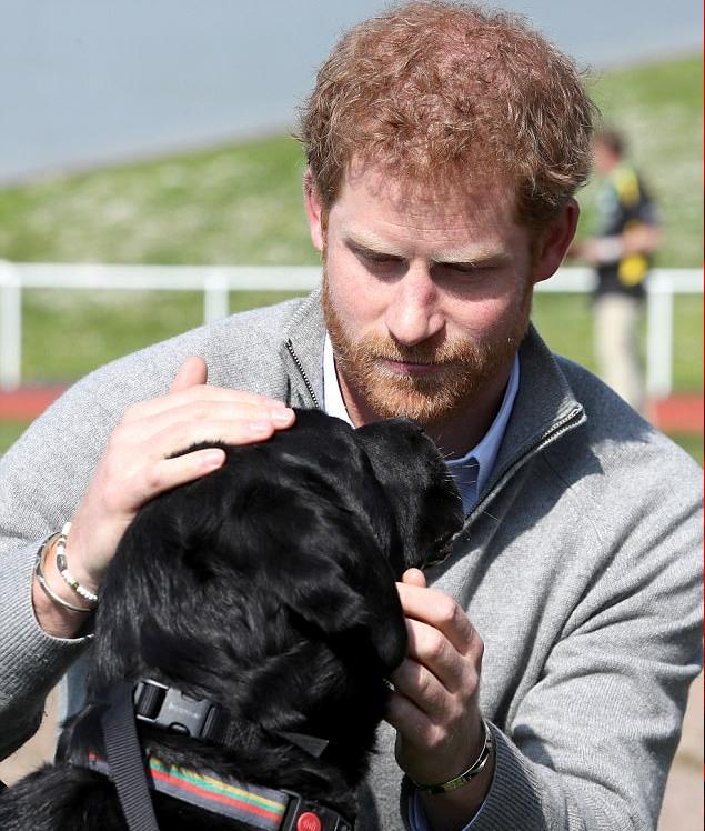 الأمير هاري مع كلب أحد المتسابقين