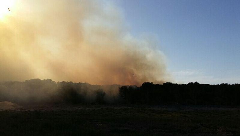حريق يلتهم 10 آلاف متر من غابة المانجروف بالقطيف