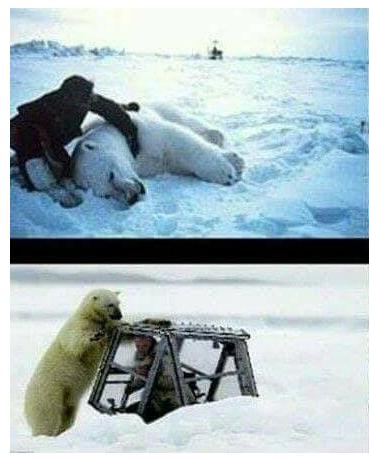 الاستعانة-بدب-قطبي-في-برنامج-مقلب-رامز