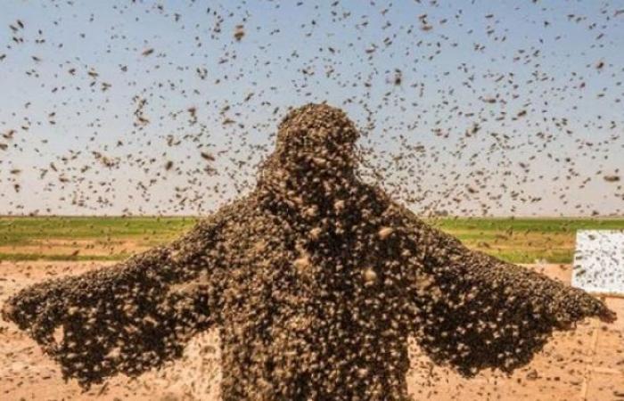 سعودي يعتزم دخول موسوعة غينيس بــ 100كغم من النحل