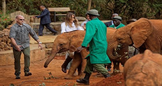 بالفيديو.. ميلانيا ترامب تتعرض للخطر بعد أن هاجمها فيل!