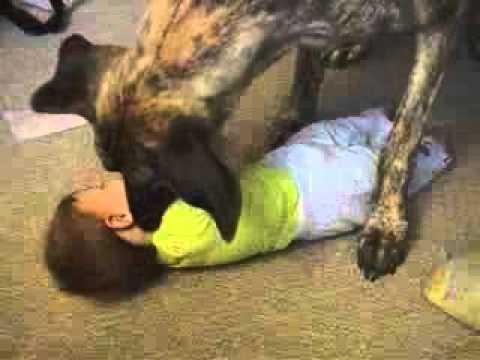 بالصور.. كلب ينهش جسد رضيعة حتى الموت أمام أمها في فناء المنزل