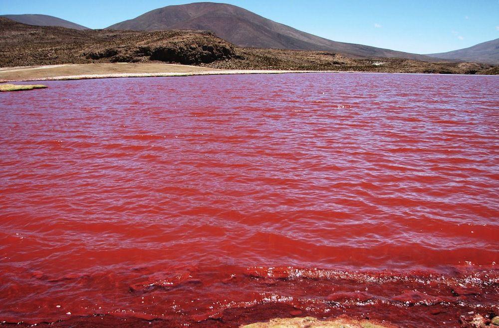 بحيرة من الدماء تجذب السياح بشكل كبير إلى تنزانيا