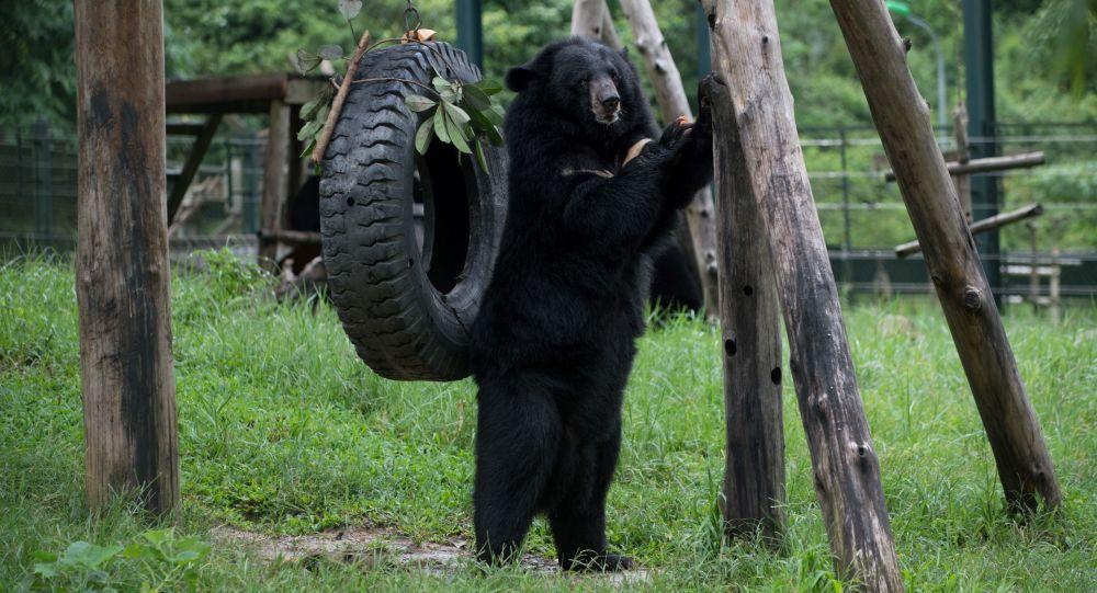 بالصور.. طفل ضاع في الغابة فأنقذه دب أسود من التجمد