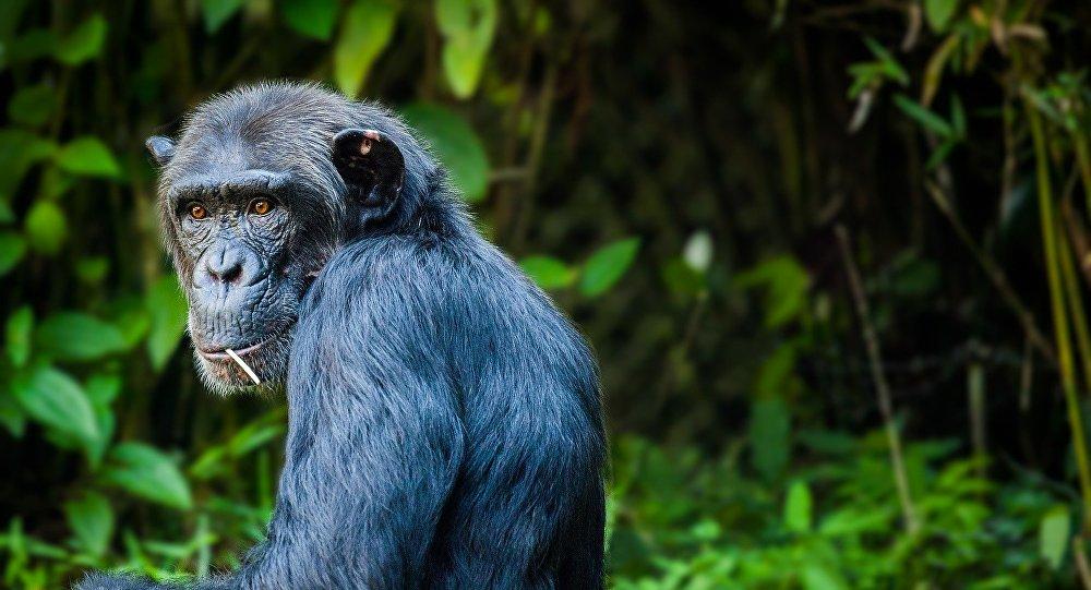 بالفيديو.. أنثى قرد تثير ذهول زوار حديقة الحيوان بما تفعله!