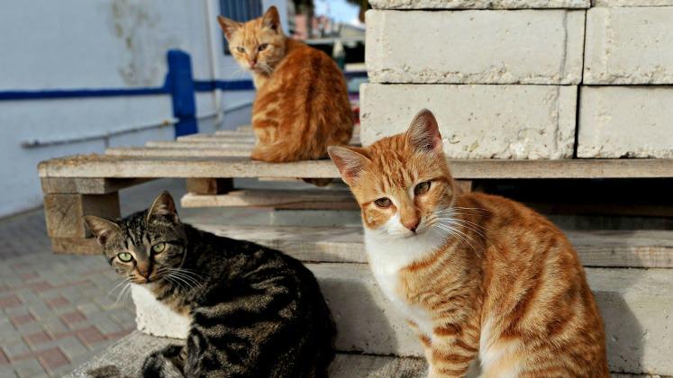 بالصور.. طلاب مدرسة يصنعون بيوتاً لقطط الشوارع