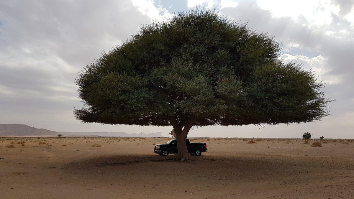 بالفيديو والصور.. السلطات السعودية تتدخل بعد ردود الفعل الغاضبة لحرق هذه الشجرة !