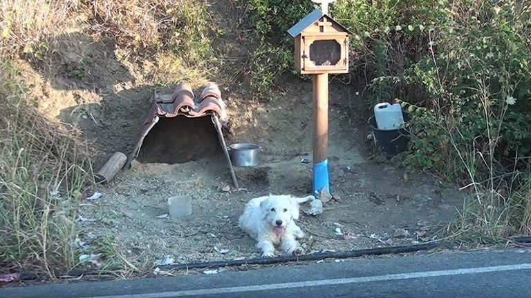 كلب ينتظر صاحبه عام ونصف في مكان الحادث نفسه !