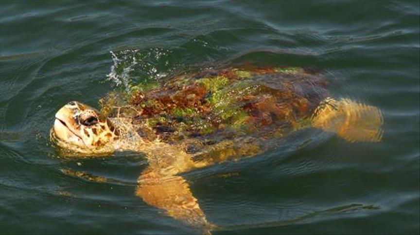 رأسان في جسد واحد .. اكتشاف نوع جديد من السلاحف لم تشاهده من قبل !