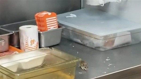 فأر يتسبب في إغلاق مطعم شهير بعد وقوعه في مقلاة زيت