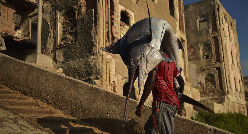 صياد يصطاد أضخم سمكة من نوعها بحجم الإنسان