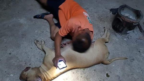 كلبة تضحي بنفسها وفاءاً لصاحبها في موقف يثير البكاء